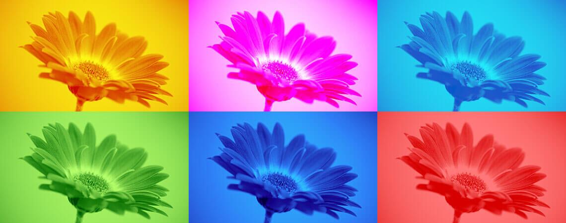 Create-Duotone-image